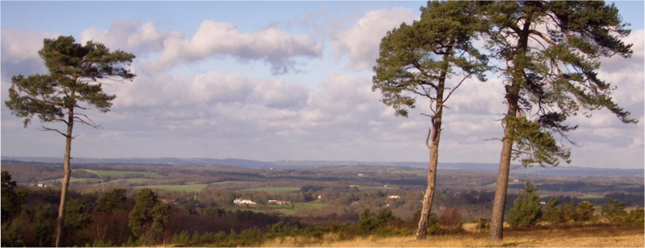 'ashdown_forest'