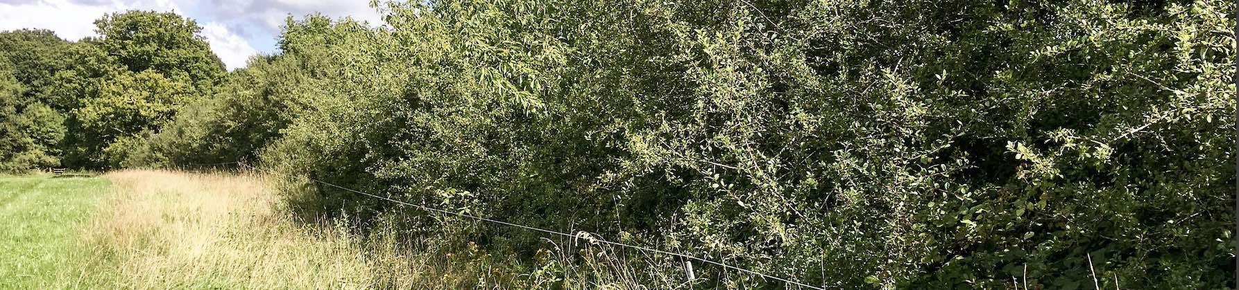 'hedge'