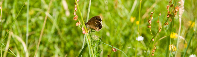 'moth'