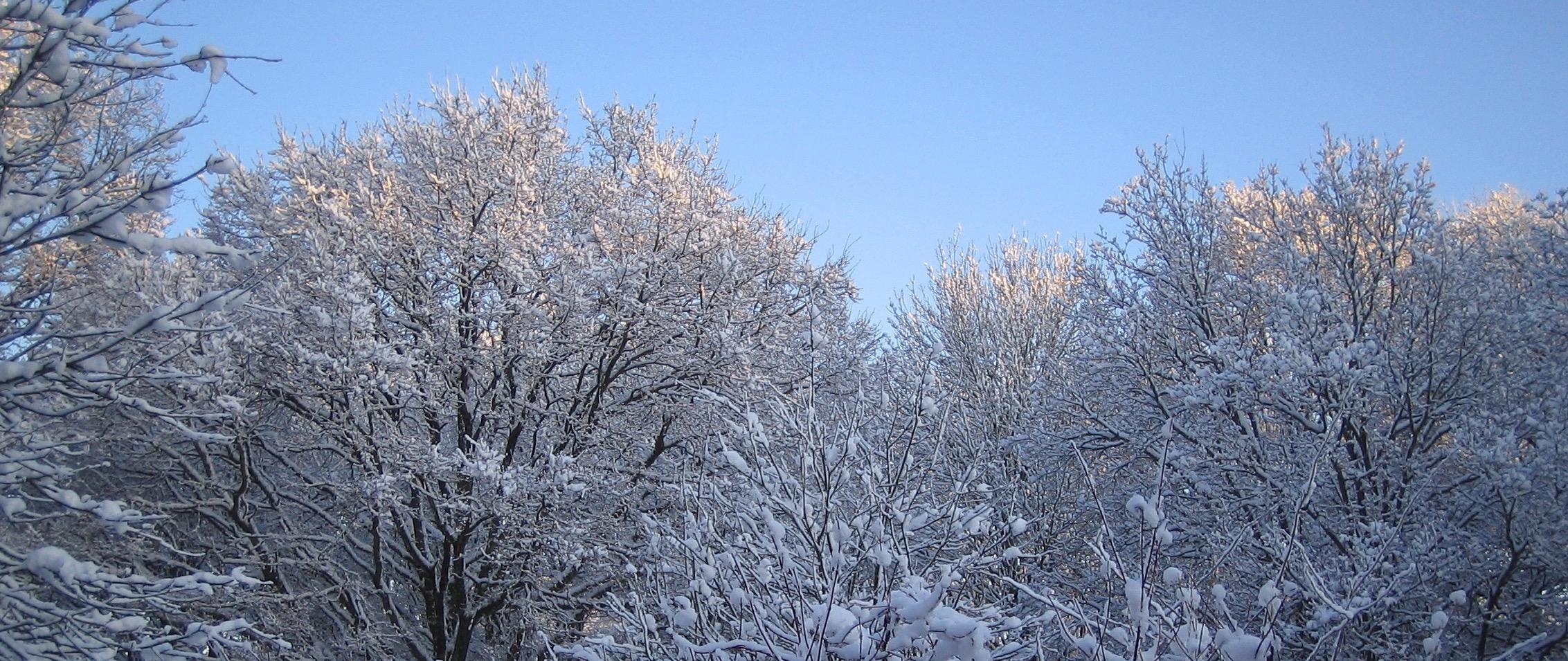 'snow